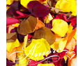 Large case 64 cups Freeze Dried Rose Petals Fall Mix